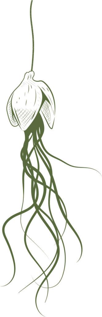 aaska tillandsia illustration bretagne graphiste morbihan