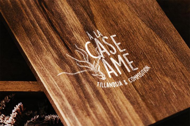 Aaska tillandsia graphisme a la case ame logo